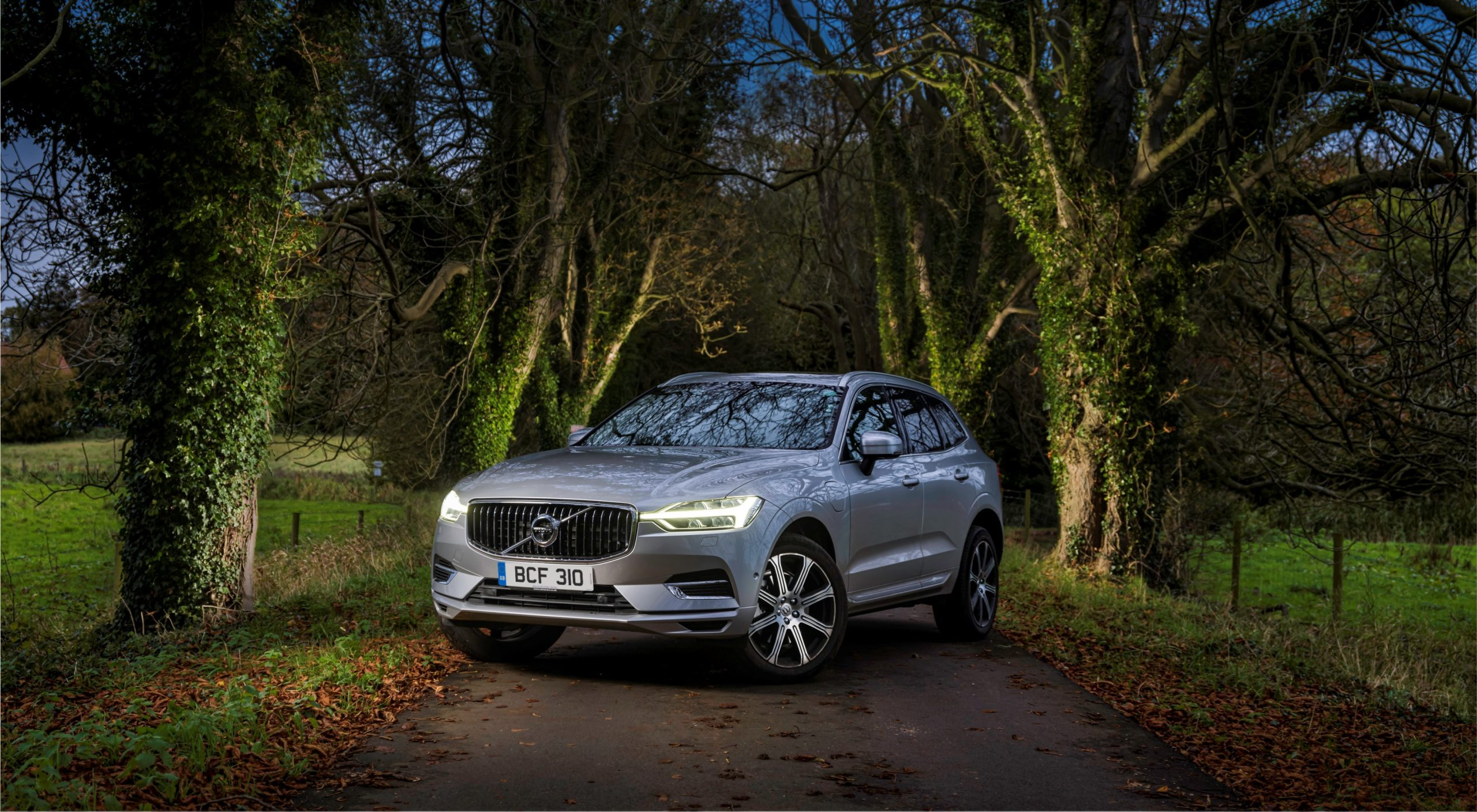 Volvo XC60 in the woods