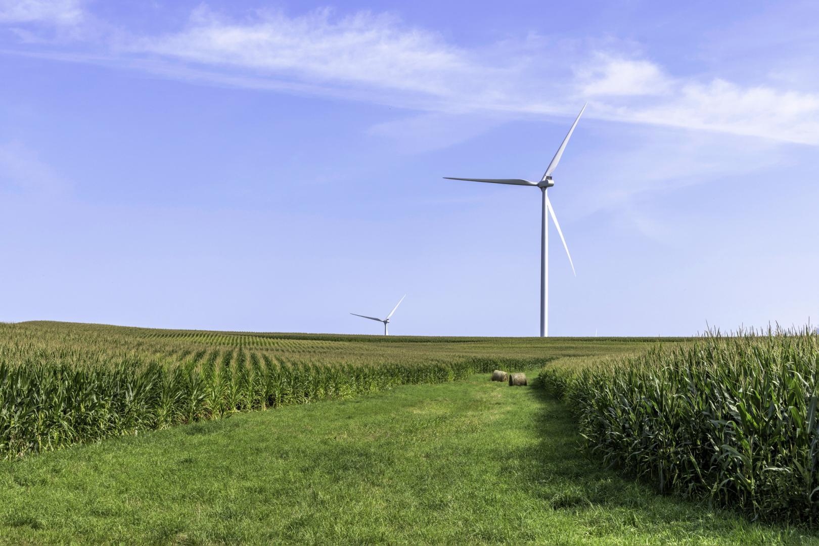 Cornfield Wind Turbine